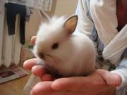 Малыши декоративных кроликов